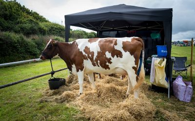 Camelford Show 2019